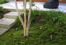 schaduw tuin