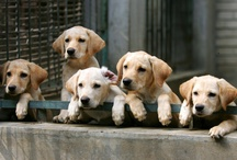 Puppies,Kittens & Other Critters / by Lynn Dingle