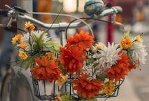 biciklik virággal