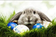 Easter! / Easter inspired craft, activities, recipes, and more!