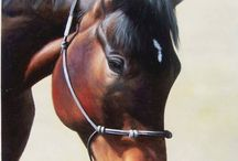 Horse Portraits / ........Amazing horse painting........ / by Paint Your Life