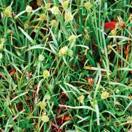 Gardening: Perrenial Weeds / by Jaci Smeltzer