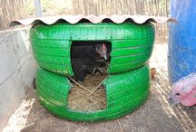 chooks and their homes
