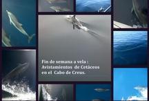 Navegar con cetáceos / Nuestras mejores ofertas para navegar en velero en la Costa Brava, las Islas Baleares y donde tu nos propongas!