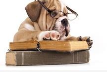 Let's play dress up! / by Alberta Veterinary Medical Association