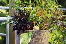 Gardening / by Paula Gamble