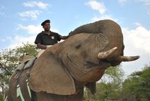 Elephant Back Safaris / im Camp Jabulani