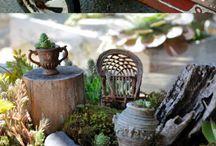 Fairy Garden / FairyGarden for my grandchildren. / by Dottie Grimes