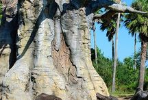 baobab trees and