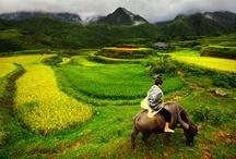 Vietnam/Cambodia 2015