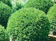 Shrubs / by Marcie McRae
