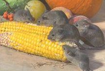 sauvez vous les souris