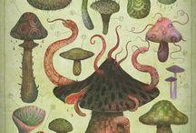 mushroom / by Leda C