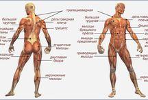 Anatomy and stuff