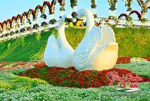 Dubai Miracle Garden / Grădina miracolelor din Dubai