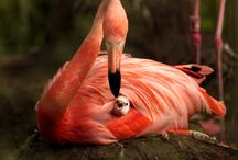 Flamingos & other beautiful birds