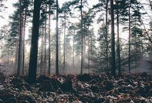 IN TO THE WOODS ▲