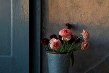 Photographie - Bouquets