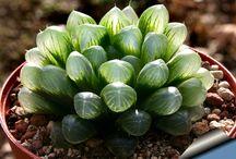 cacti & succulents & plants ref