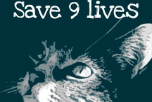 go rescue a cat, save 9 lives / by Trinity