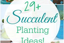 sacculent plants ideas