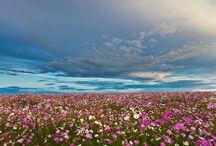 Fantastic Photography
