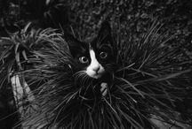 kat in plant