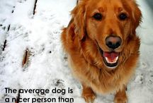 My Love of Goldens / by Kat Normandin