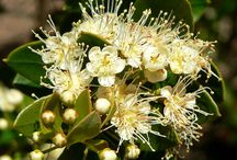 Flora nativa del campo / arboles, arbustos, plantas