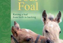 Raising a Foal / by Debbie Hein
