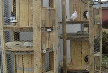 bird tunel