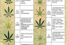 Horticultura orgánica
