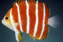 Peixes e corais