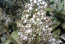 minhas relíquias  flores do brejo ❤