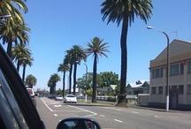 Marewa - Napier