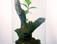 terrarium bottle