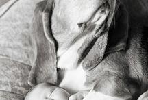 maternity baby photos / by Paula Munch