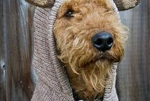 airedale terrier♡