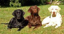 Meine Lana - rund um den Hund / Hundebeschäftigung, DIY, Wissenswertes