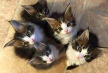 Kedi köpek:)