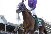 California Chrome / I love him