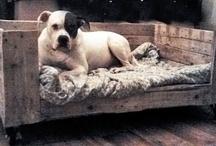 Dog - Mazzel