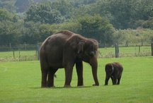 30 Interesting Facts about Elephants