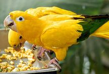 Kisah Saudagar Kaya dan Burung Cacat untuk Bahan Renungan