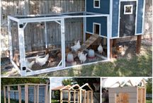 Cabanes de poulettes