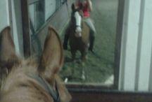 Paarden van manege