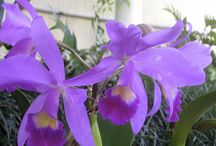 ORCHID OBSESSION  !!! / IN MY GARDEN