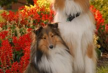 mis perros favoritos