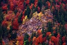 autumn / by Irina Kolisnychenko