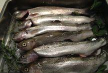 FISCH - frisch gefisch! / Ins Netz gegangen; gut und gesund!
